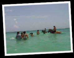 Balade à Cheval en Guadeloupe à St François