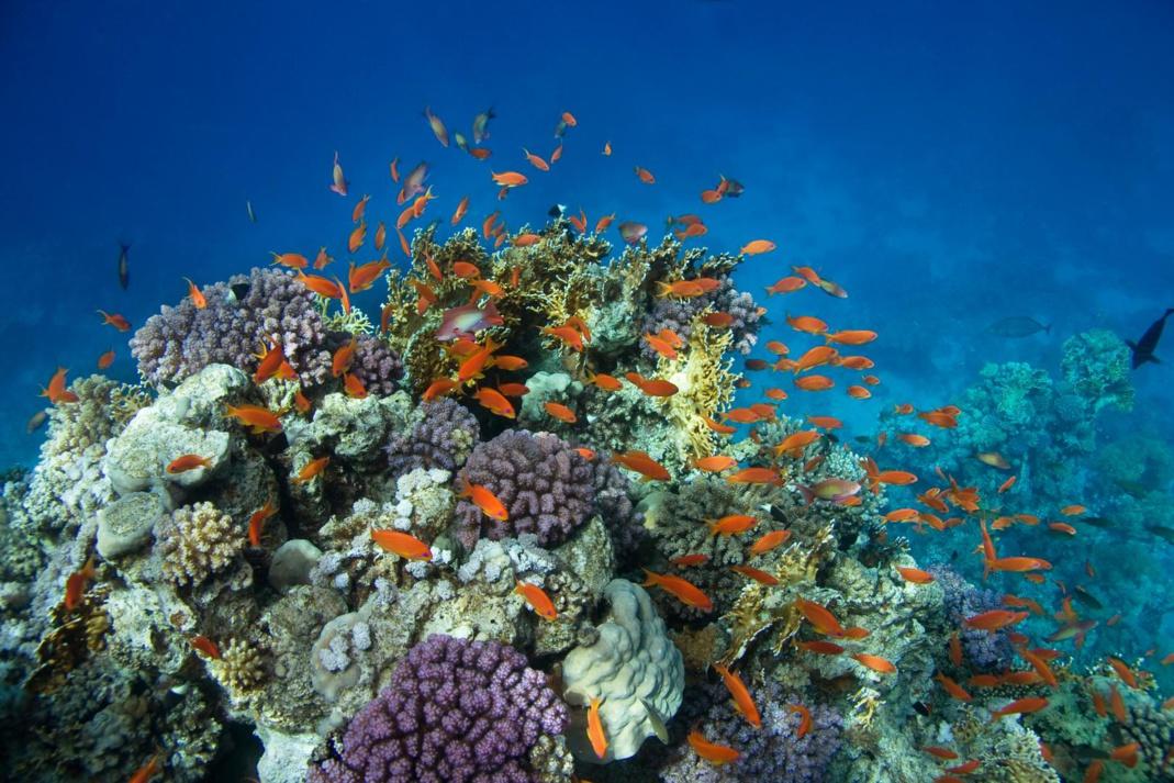 Plonger en Guadeloupe