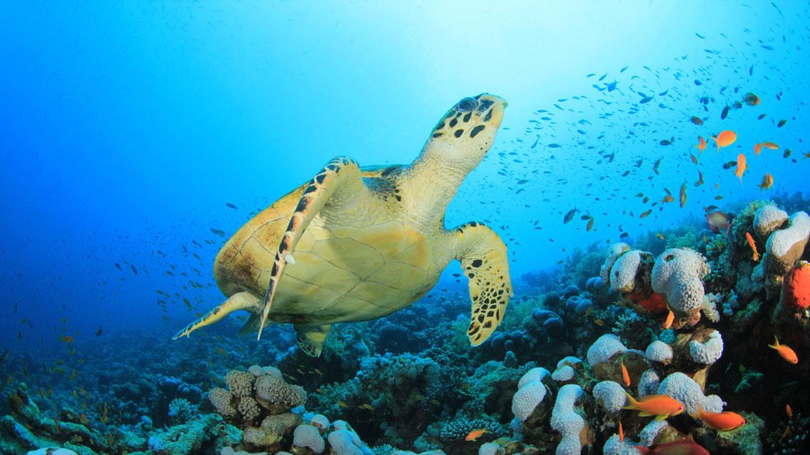 Plongée en Guadeloupe