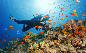 Découvrir la plongée sous marine en Guadeloupe